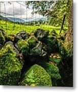 Mossy Wall Metal Print