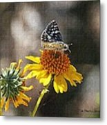 Moth And Flower Metal Print