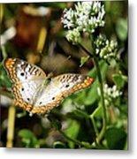 Moth On White Flower Metal Print