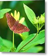 Moth On Yellow Metal Print