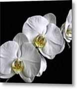 Moth Orchid Trio Metal Print by Ron White