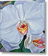 Moth Orchids Metal Print