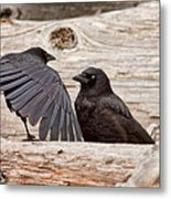 Mother And Baby Crow At The Beach Metal Print