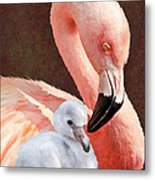 Mother And Baby Flamingo Metal Print