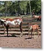 Mother And Baby Horses Metal Print