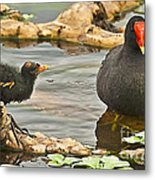Mother And Chick Metal Print