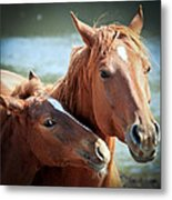 Mother And Filly Metal Print