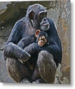 Mother And Child Chimpanzee Metal Print