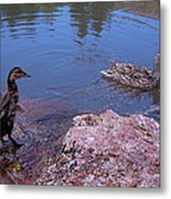 Mother And Child Metal Print by Rona Black