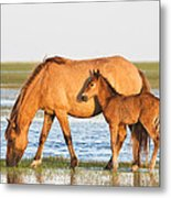 Mother And Foal Metal Print by Bob Decker