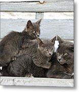Cat And Kittens Metal Print