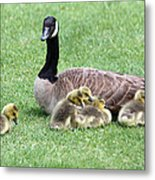 Mother And Young Metal Print