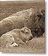 Mother Buffalo And Calf Sepia Metal Print