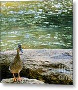 Mother Duck Metal Print