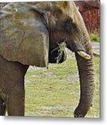 Mother Elephant Metal Print