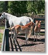 Mother Horse With Twin Colts Metal Print