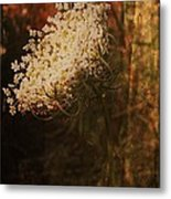 Mother Nature's Lace Metal Print