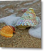 Mother Of Pearl Metal Print by Robert Bascelli