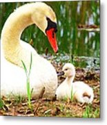 Mother Swan And Baby Metal Print