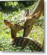 Motherly Love Metal Print