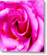 Mother's Day Rose Blank Metal Print