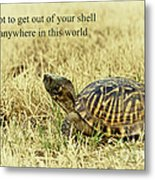 Motivating A Turtle Metal Print by Robert Frederick