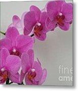 Mottled Orchid 1 Metal Print
