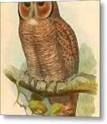 Mottled Wood Owl Metal Print