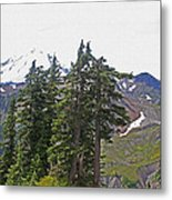 Mount Baker Area Wilderness Metal Print