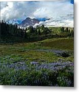 Mount Baker Lupine Meadows Metal Print