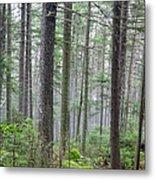 Mount Jim - Kinsman Notch New Hampshire Metal Print