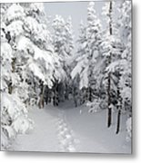 Mount Osceola Trail - White Mountains New Hampshire Metal Print