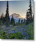 Mount Rainer Flower Fields Metal Print
