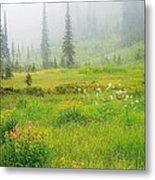 Mount Revelstoke National Park British Columbia Canada Metal Print