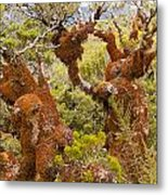 Mountain Beech Rain Forest In Fjordland Np Nz Metal Print