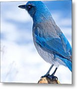Mountain Blue Bird Metal Print