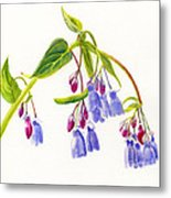 Mountain Bluebells Metal Print by Sharon Freeman
