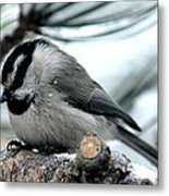 Mountain Chickadee During A Light Snow Metal Print