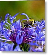 Mountain Cornflower And Bumble Bee Metal Print
