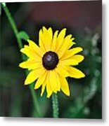 Mountain Daisy Yellow Metal Print