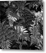 Mountain Ferns 1 Metal Print by Roger Snyder