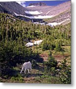 Mountain Goat 5 Metal Print