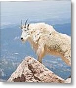 Mountain Goat Up High Metal Print
