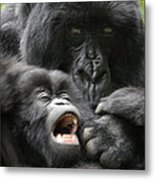 Mountain Gorilla Adf2 Metal Print