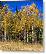 Mountain Grasses Autumn Aspens In Deep Blue Sky Metal Print