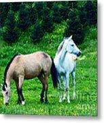 Mountain Horses Grazing  Metal Print