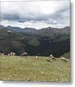 Mountain Landscape With Bighorn Sheep Metal Print