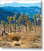Mountain Layer Landscape From Quail Springs In Joshua Tree Np-ca- Metal Print