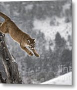 Mountain Lion - Silent Escape Metal Print by Wildlife Fine Art