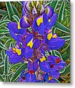 Mountain Lupine In Ancient Incan Pisac In Andes Mountains Above Sacred Valley-peru   Metal Print